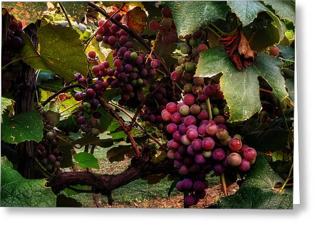 Hanging Out In The Vineyard Greeting Card