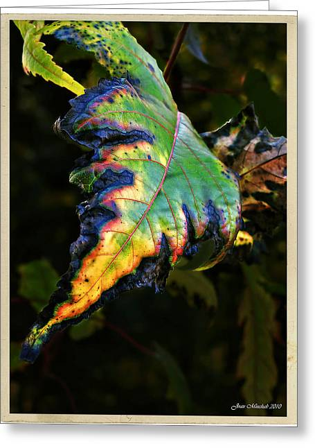 Greeting Card featuring the photograph Hanging Out by Joan  Minchak