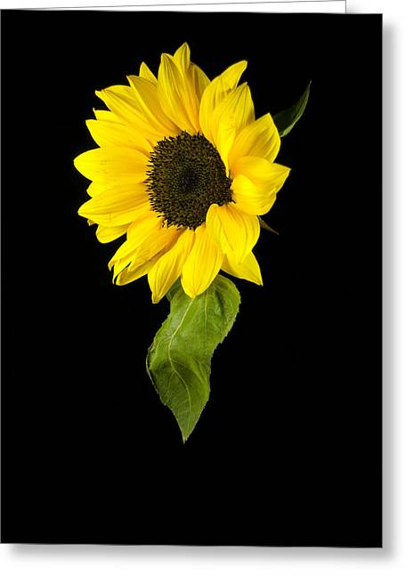 Greeting Card featuring the photograph Hanging Sunflower by Elsa Marie Santoro