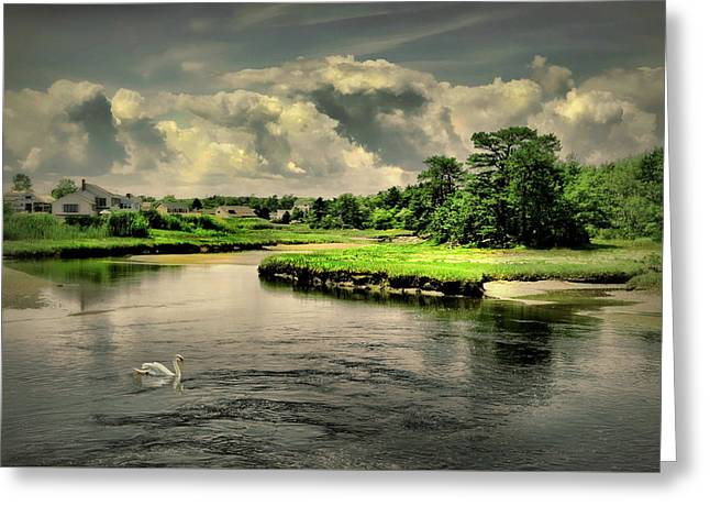 Gooch's Creek Greeting Card by Diana Angstadt