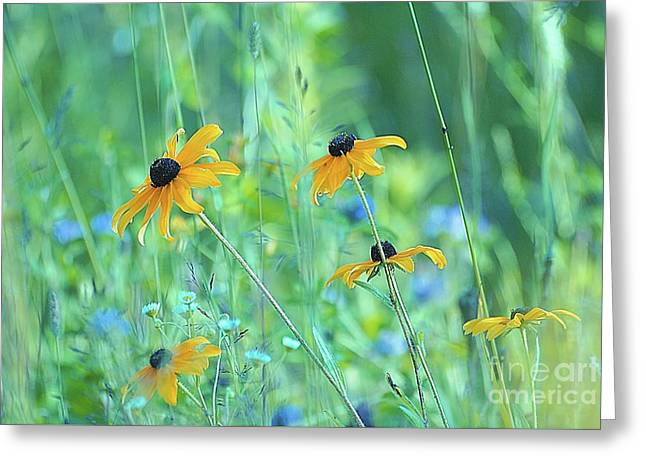 Happiness Is In The Meadows - 111 Greeting Card by Variance Collections
