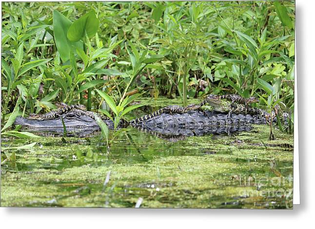 Happy Baby Gators With Mom Greeting Card