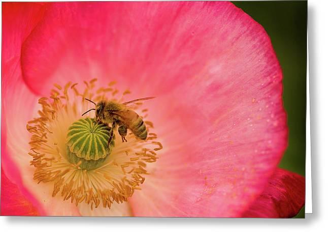 Happy Bee Greeting Card