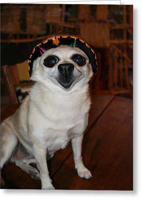 Happy Chihuahua  Greeting Card by Angie Wingerd
