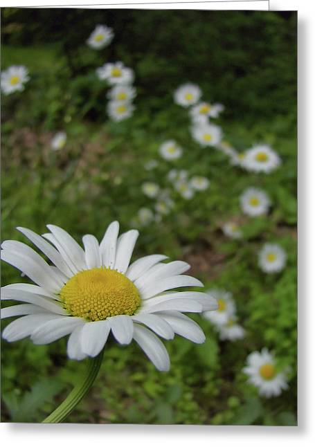 Happy Daisy Greeting Card by JAMART Photography