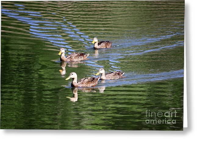 Ripples In Water Greeting Cards - Happy Ducks on the Pond Greeting Card by Carol Groenen