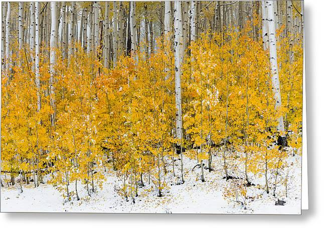 Greeting Card featuring the photograph Happy Fall by Chuck Jason