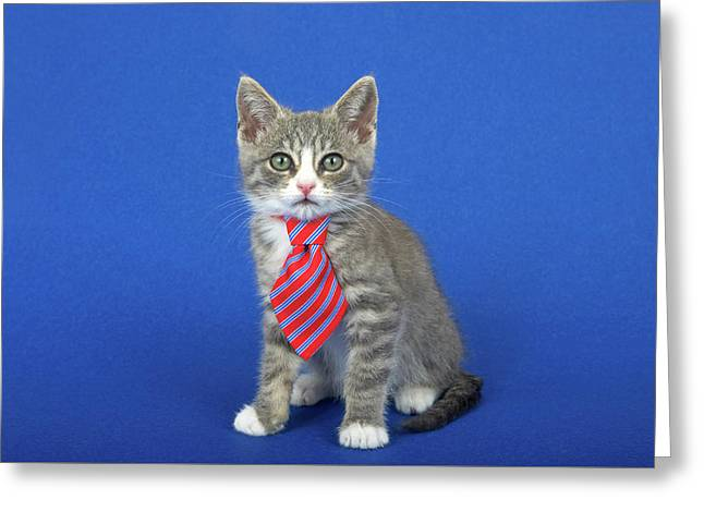 Happy Fathers Day Kitten Greeting Card