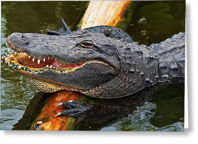 Florida Gators Greeting Cards - Happy Gator Greeting Card by Christopher Holmes