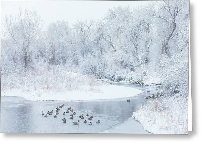 Greeting Card featuring the photograph Happy Geese by Darren White