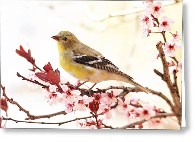 Happy Goldfinch Greeting Card