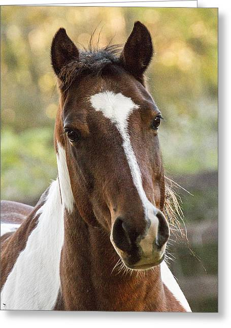 Happy Horse Greeting Card