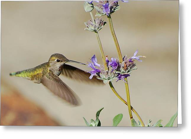 Happy Hummer Greeting Card by Jean Booth