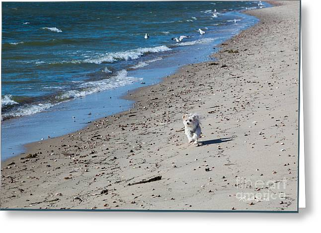 Greeting Card featuring the photograph Happy I Am by Michelle Wiarda