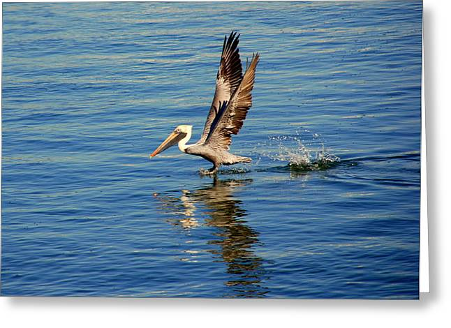 Happy Landing Pelican Greeting Card