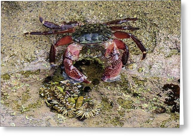 Happy Little Crab Greeting Card