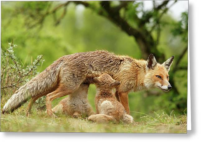 Happy Moments - Mother Fox Suckling Her Fox Kits Greeting Card by Roeselien Raimond