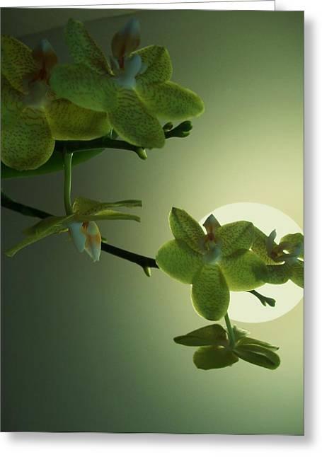 Happy Moon Greeting Card by Nereida Slesarchik Cedeno Wilcoxon