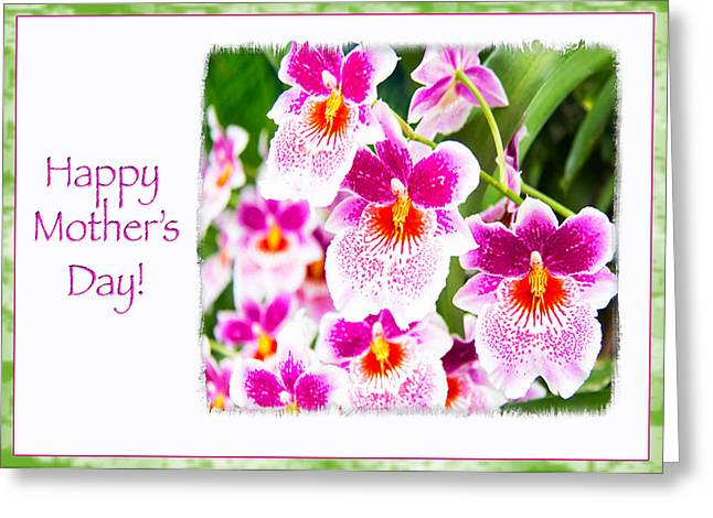 Happy Mother's Day Pink Cattleya  Orchids Greeting Card by Daphne Sampson