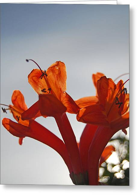 Happy Orange Greeting Card by Jean Booth