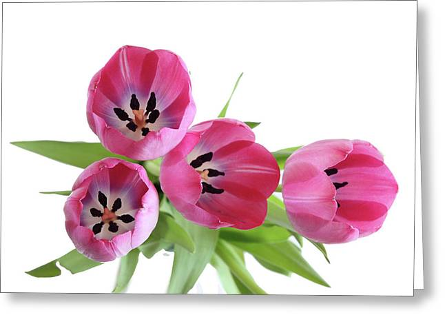 Greeting Card featuring the photograph Happy Pink by Marie Leslie