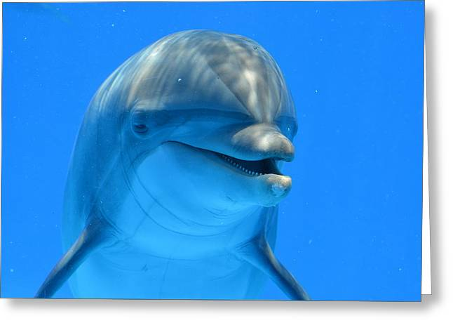 Happy Smiling Dolphin Greeting Card