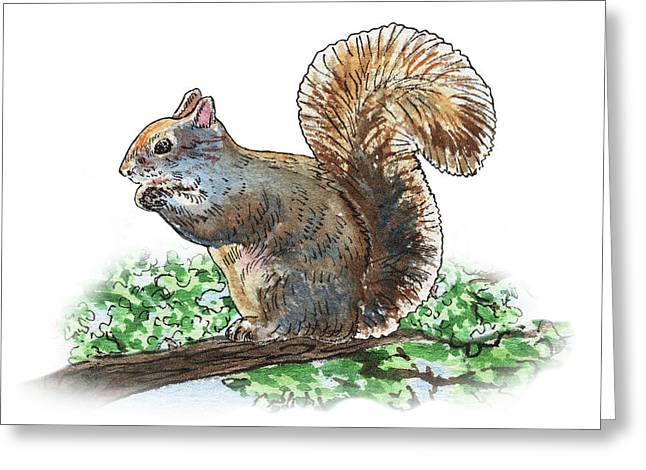 Happy Squirrel  Greeting Card