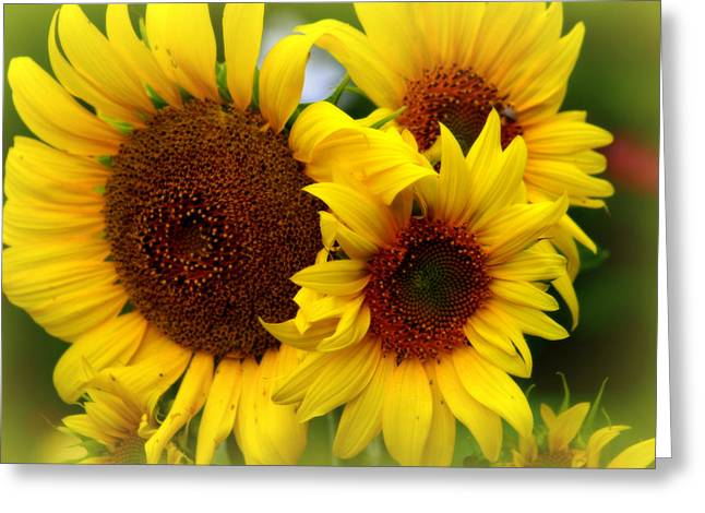 Greeting Card featuring the photograph Happy Sunflowers by Kay Novy