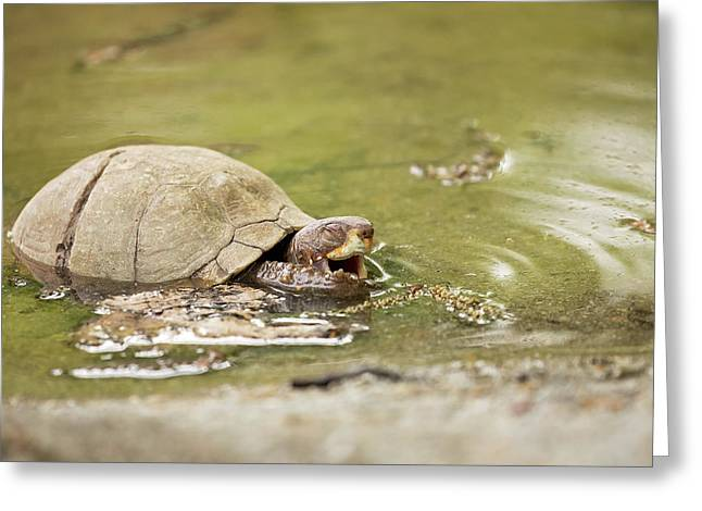Happy Turtle Greeting Card