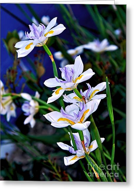 Happy Wild Iris Greeting Card by Kaye Menner