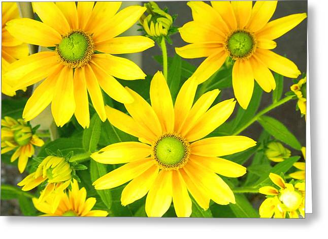 Happy Yellow Summer Cone Flowers In The Garden Greeting Card by Amy McDaniel
