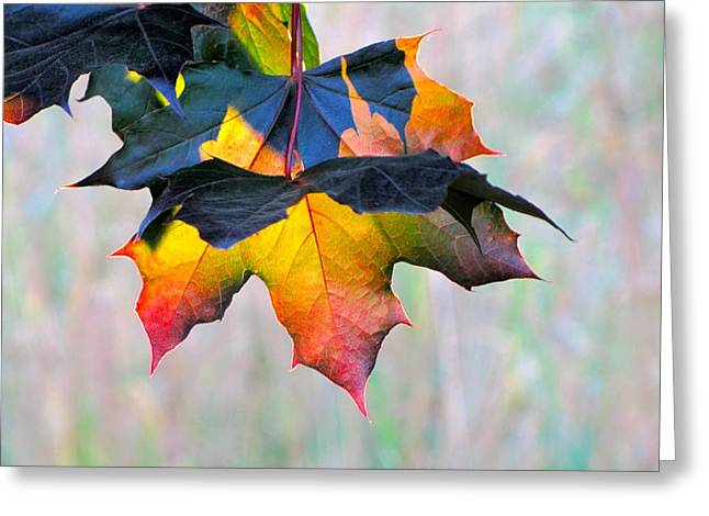Sean Griffin Greeting Cards - Harbinger of Autumn Greeting Card by Sean Griffin
