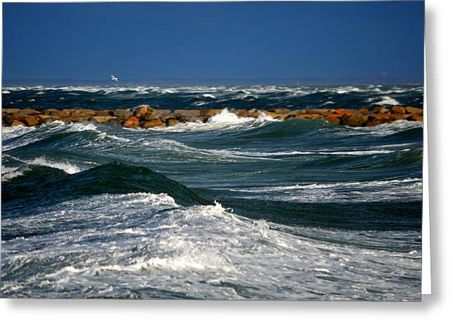 Harbor Blues - Cape Cod Bay Greeting Card by Dianne Cowen