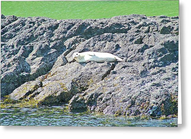 Harbor Seal By Tide Pool In Yaquina Head Outstanding Natural Area In Newport, Oregon Greeting Card