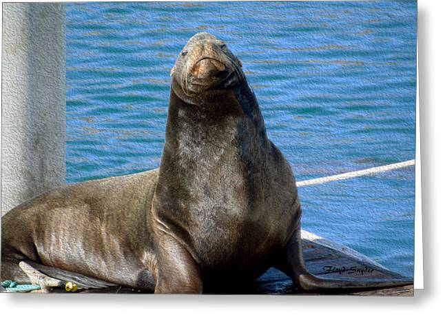 Harbor Seal In Morro Bay Greeting Card by Floyd Snyder