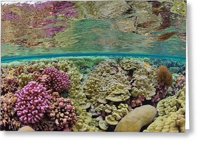Ocean Habitat Greeting Cards - Hard Coral Carpets A Shallow Seafloor Greeting Card by Brian J. Skerry
