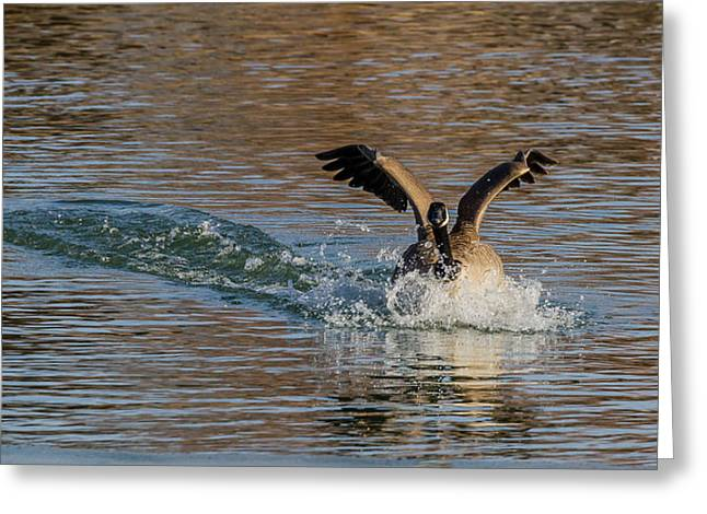 Greeting Card featuring the photograph Hard Landing by Yeates Photography