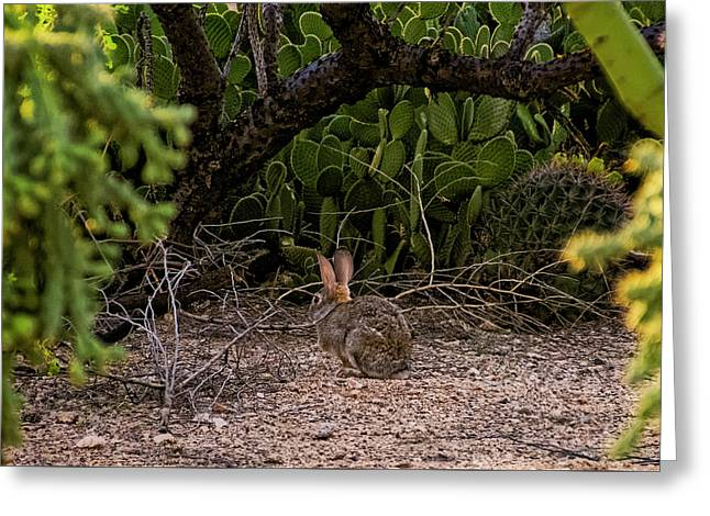 Greeting Card featuring the photograph Hare Habitat H22 by Mark Myhaver