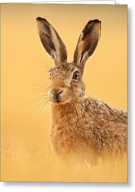 Hare In Barley Stubble Greeting Card