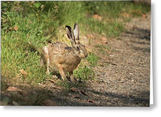 Hare In The Woods Greeting Card