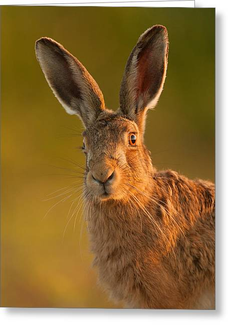 Hare Portrait Greeting Card