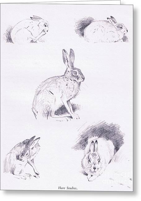 Hare Studies Greeting Card by Archibald Thorburn