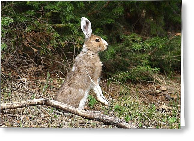Hare That Greeting Card