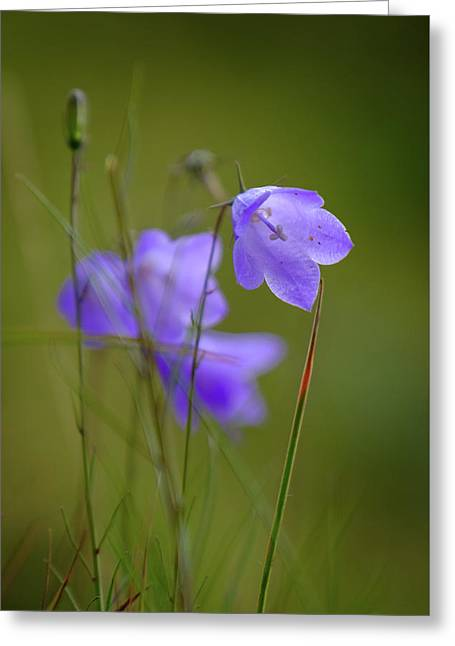 Greeting Card featuring the photograph Harebell by RKAB Works