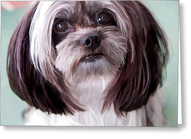 Greeting Card featuring the photograph Harley by Cherie Duran