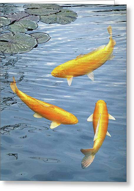 Greeting Card featuring the photograph Harmony - Golden Koi by Gill Billington