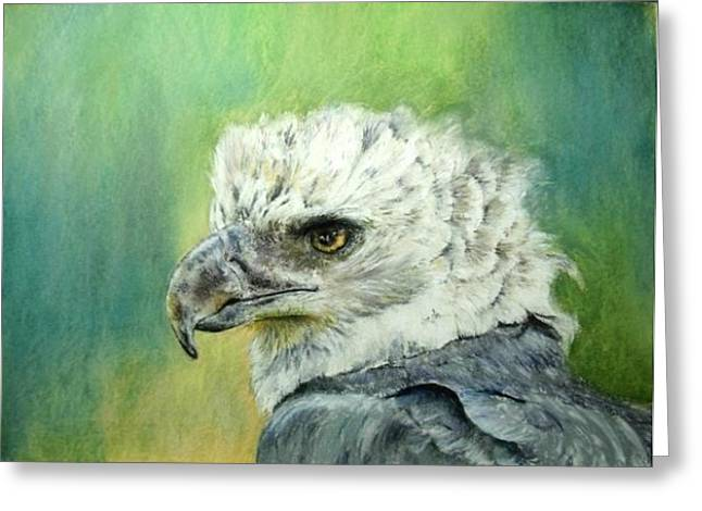 Greeting Card featuring the painting Harpy Eagle by Ceci Watson