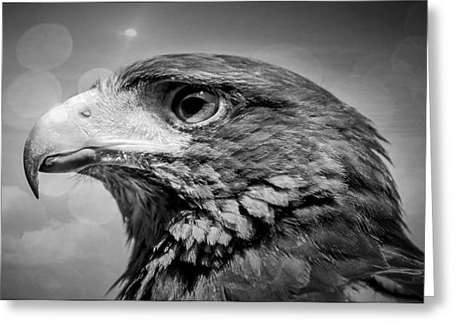 Harris Hawk  Black And White Greeting Card