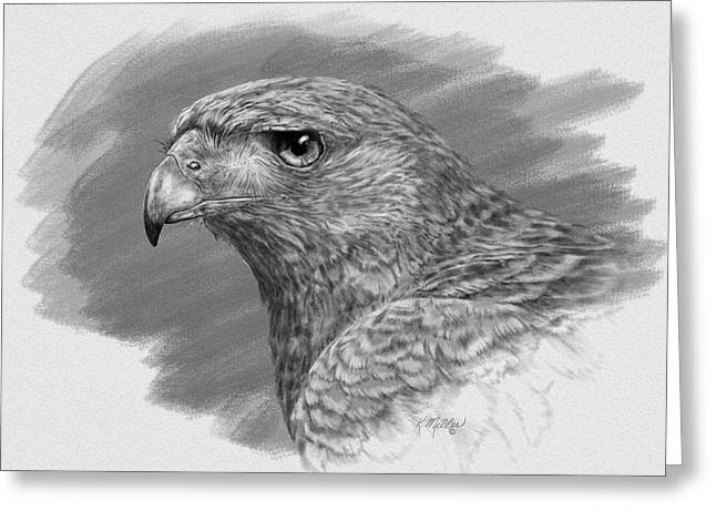 Harris Hawk Drawing Greeting Card by Kathie Miller