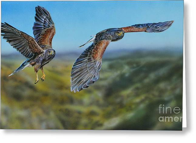 Harris's Hawks Greeting Card